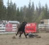 Rez Dog, 100 Mile Rodeo